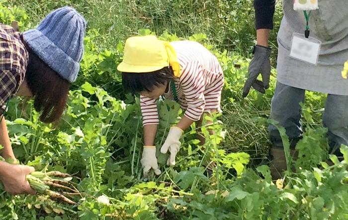 勝間田塾 20161029_収穫体験_09